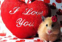 My Funny Valentine