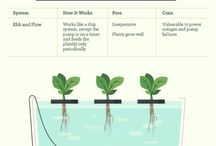 Type of hydroponic system