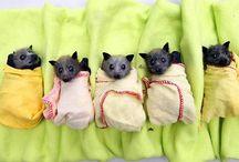 Baby Animals & Pets
