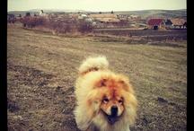 De-acasă... :)