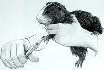 Guinea pigs painting (Morčata malba)