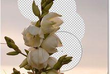 tutorials photoshop