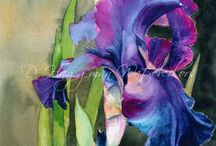Irysy / kwiaty