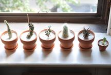 Plants at Home - Apartment Therapy / by Apartment Therapy