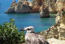A costa do Algarve  / Alguns dos mais belos cenários  do litoral algarvio