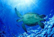Turtle Island Fiji Honeymoon