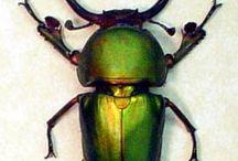 beetle and bug