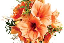 Wedding Bouquets / by Cindy Countie