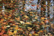 #fall