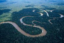 Amazon Rainforest: Dare to live