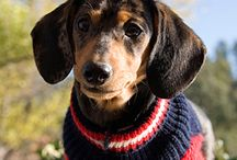Roxy Doxie / by Penny Kinchen