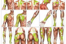 Body Trigger/Massage points