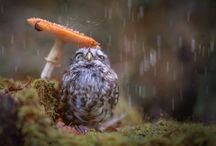 Tips Merawat Burung di Musim Hujan