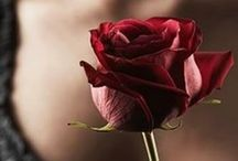 a rose is a rose...