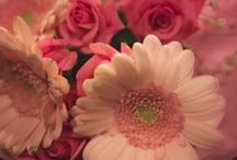 flowersnap