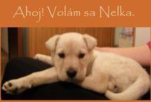 Nelka / náš psík