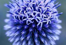 Bleu and bleu