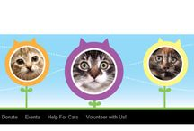 Adoptable Cats @ TCR in Toronto, ON / Check out some of our available kitties....