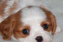 soo adorable