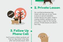 All Positive Dog Training - Lockport NY