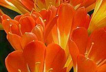 ♡ Exquisite Flowers ♡