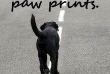 puppy love / by Julie O'Neill