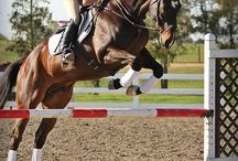cross-country fences / Equestrian sporting activity. Involving jumping natural fences in parkland settings, combined with dressage and show-jumping