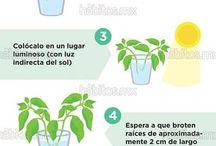 Plantas aromáticas en casa