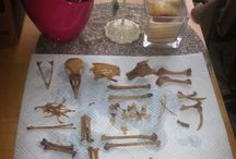 Taxidermy and bones / Things I collect and make