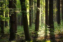 erdő...fák...víz