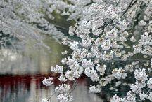 Wiosna- spring