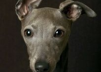 Greyhound obsession ❤ / by Katie Pottle