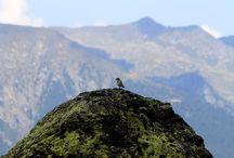 #comunqueinCIMA / Aforismi dedicati al meraviglioso mondo della montagna, con le sue vette e i suoi silenzi.