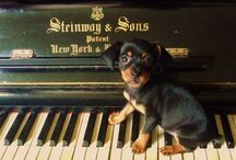 Puppies, Pianos, and other Amazing Animals