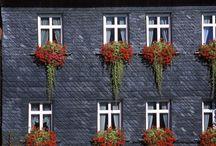 Window Boxes / by Decadent Daylilies - Daylily Nursery