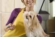 Puppy Love / Doggie care, tips And recipes / by Leigh Erickson