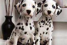 I ♥ Dogs