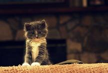 I love kitty's<3