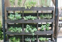 Garden & Outdooor Ideas