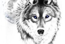 ¤ Vlk #wolf ¤