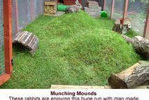 Rabbits DIY