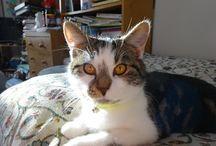 Susie, my cat