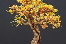 Dream bonsai