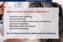 Pet Dental Emergencies / Routine dental care is important for our pets, but do you know what a true dental emergency is?  Facial or oral swelling, a fractured tooth, oral trauma (bone fractures, lacerations, puncture wounds), bleeding and excessive drooling should always be addressed immediately.