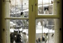 Cats do love Windows!