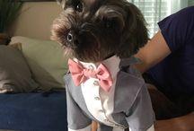 Dog wedding outfits