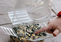 Bird Feed ideas