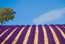 La Provence - on y va!