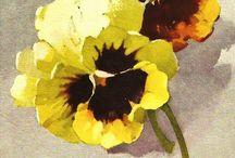 Catharine Klein / http://arkadia-bonumest.blogspot.com/