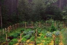 Veg garden / by Karla Olson